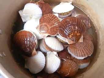 めかぶと稚貝の潮汁の稚貝を茹でる