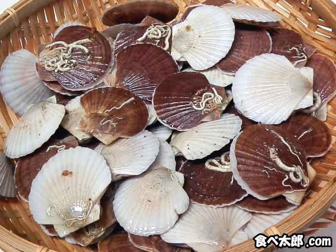 帆立の稚貝(ベビーホタテ)