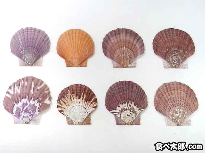 帆立稚貝の色や模様