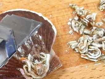 帆立稚貝の付着物をカッターで削る