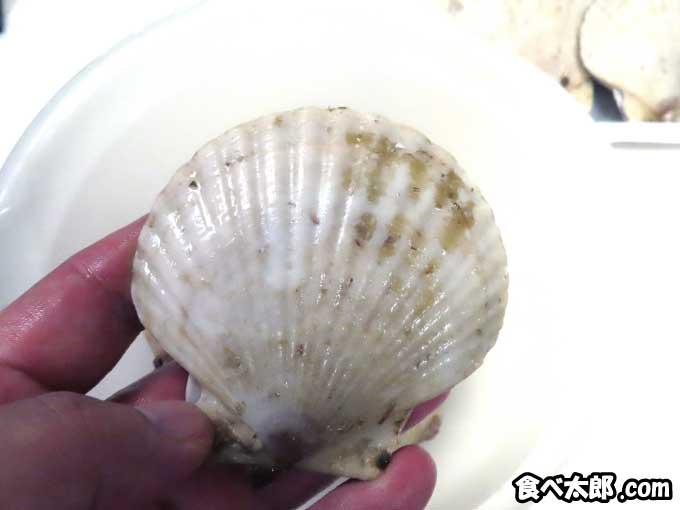 夏も終わる頃の大きな帆立稚貝