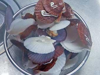 茹でた帆立稚貝