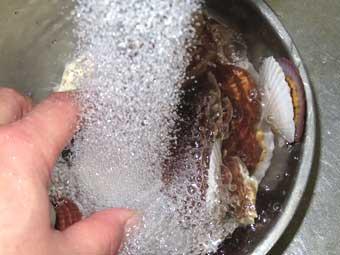 帆立稚貝の水洗い