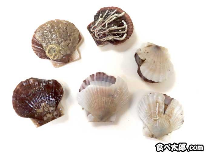 殻が割れたり付着物がある帆立稚貝
