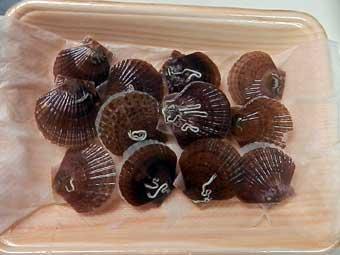 帆立稚貝をそのまま冷蔵保存