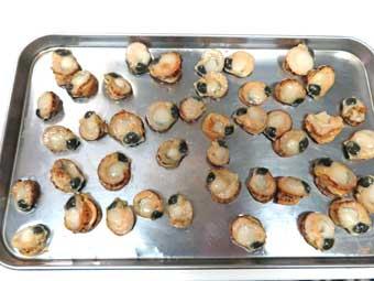 帆立稚貝を金属トレイで冷凍