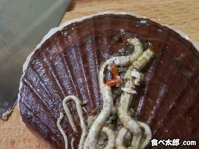帆立稚貝に付くカサネカンザシの本体