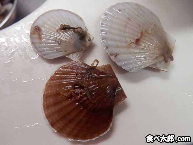 帆立稚貝に付く藻屑のようなもの