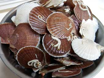殻付きの帆立稚貝(ベビーホタテ)