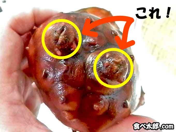 海鞘(ホヤ)の突起物