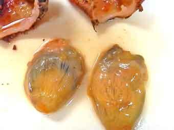 海鞘(ホヤ)の身の部分