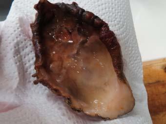 ホヤの殻の水気を拭き取る
