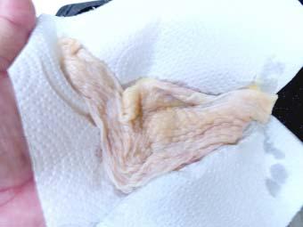 カオマンガイ用の鶏むね肉の皮
