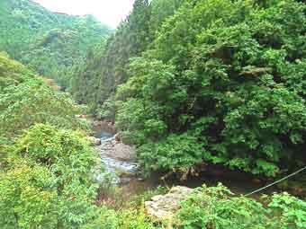 国道299号線沿いの吾野の大自然