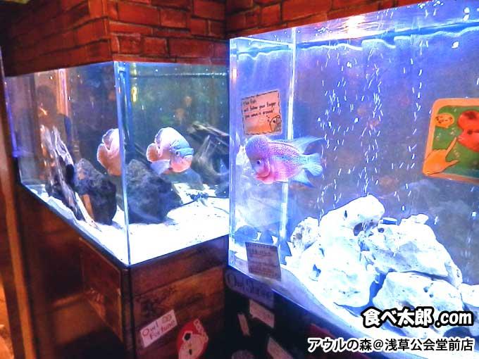 アウルの森@浅草公会堂前店の水槽
