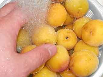 梅干し用の梅を洗う